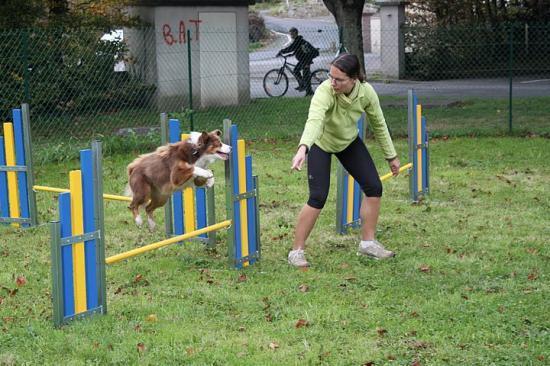 club canin a landivisiau